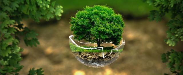 Negen keer mediteren over de ecologische crisis met Bidden Onderweg