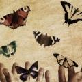 Vlinders, twee handen, vrijheid, gevangenis